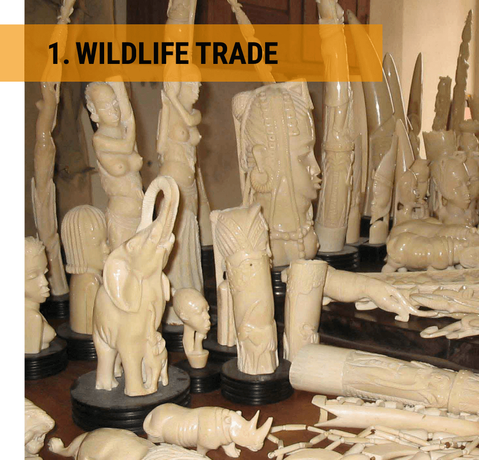 Illegal wildlife trade