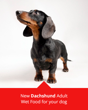Dachshunds and ROYAL CANIN