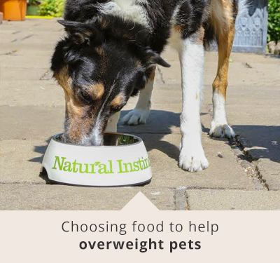 Natural Instinct - food to help overweight dogs