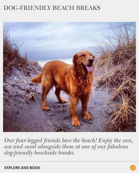 Dog-Friendly Beach Breaks